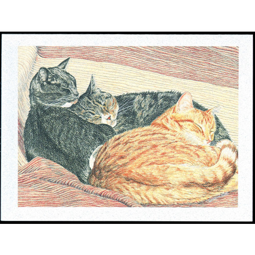##D## Catnaps (With Deepest Sympathy)*25
