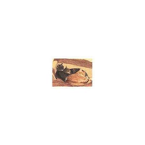##D## Catnaps (Blank Inside) *25