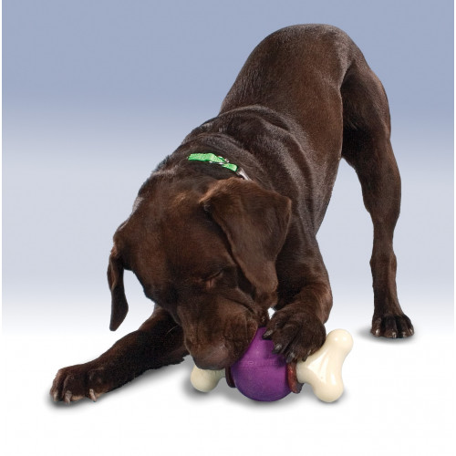 Busy Buddy® Bouncy Bone™ - M*1